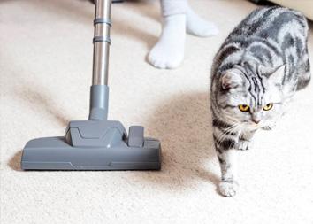 Как вывести запах кошачьей мочи с ковра?