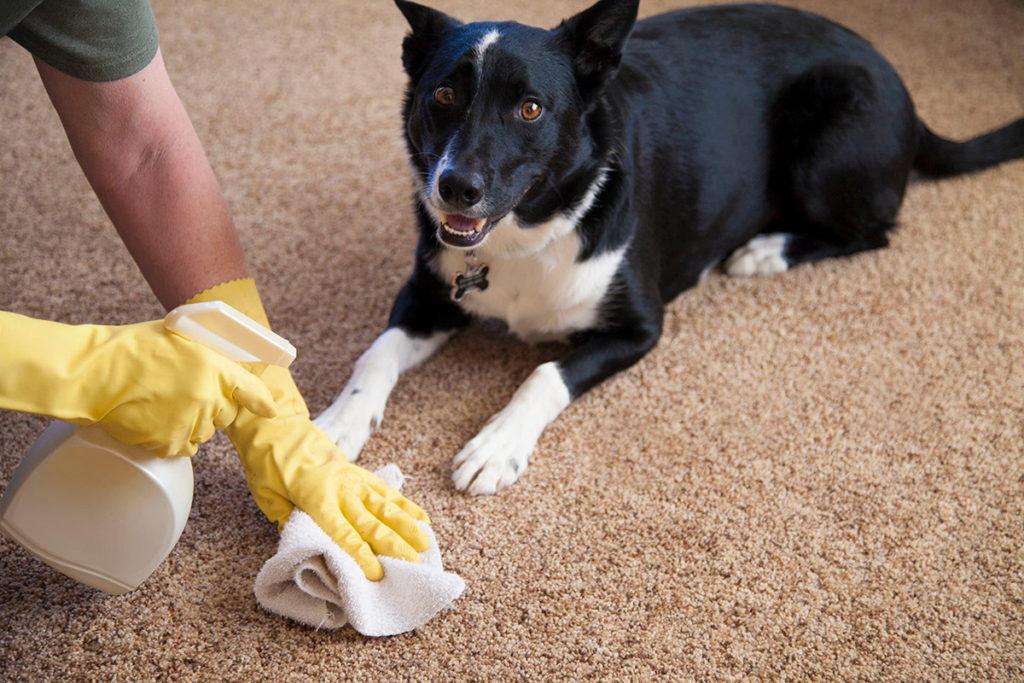 Как вывести запах мочи собаки с ковра