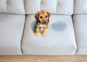Как отчистить диван от мочи