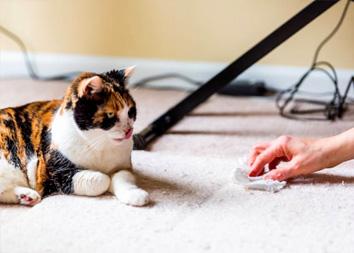 Вывести запах кошачьей мочи с ковра